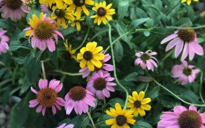 What's Blooming at the Garden & Design Center? A lot!