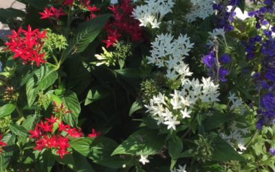 New! House Plants Arrive at Our Garden Center!
