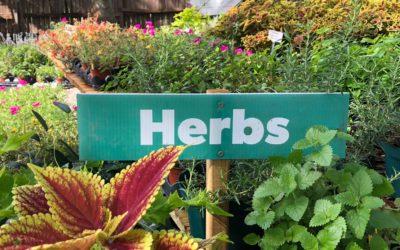 Herbs In Your Garden
