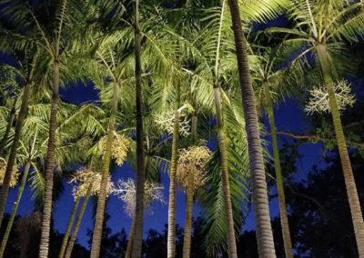 terranova-outdoor-living-uptreelights