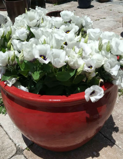 Flowers planted in hand painted pot