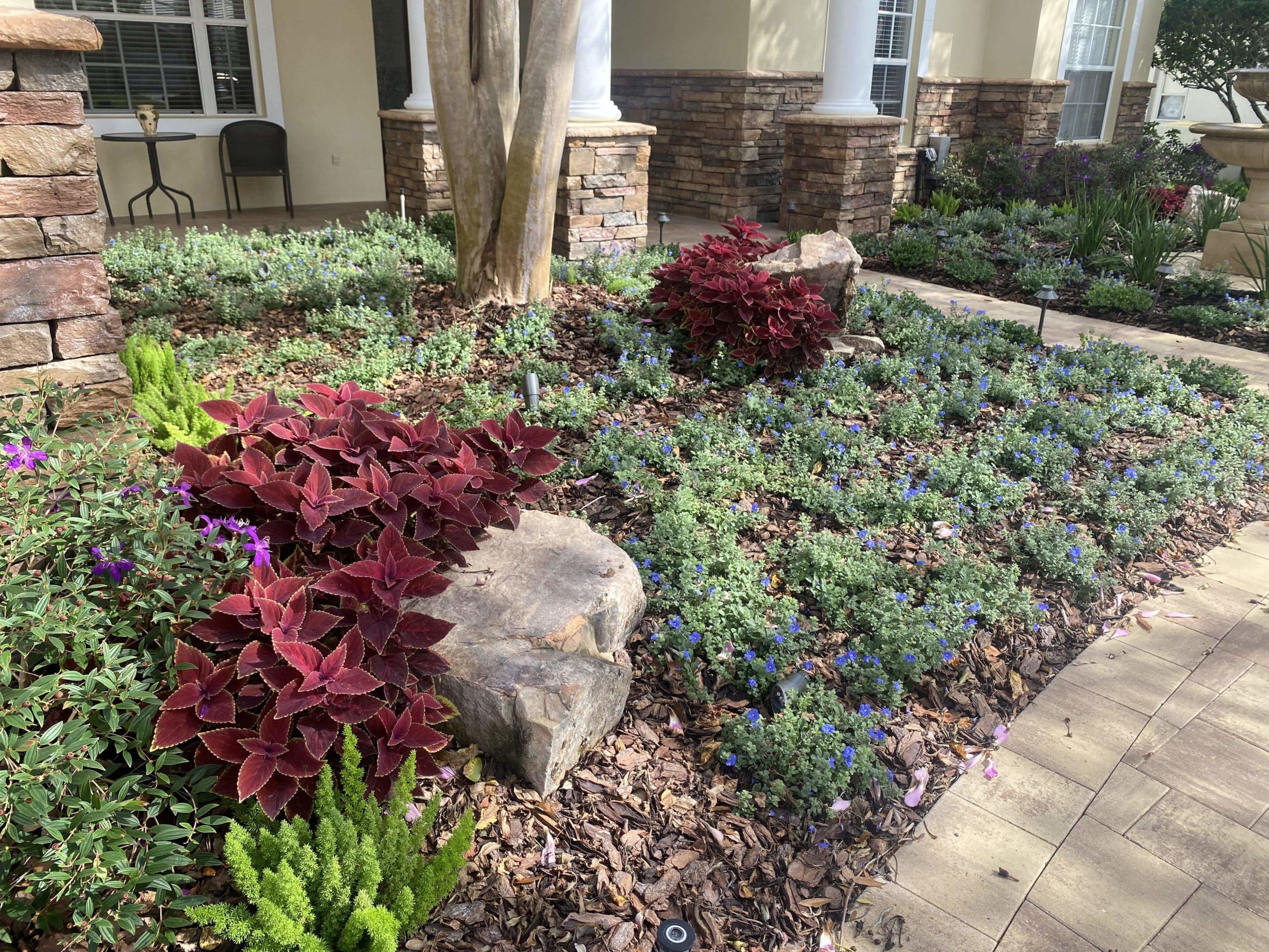 yard garden clearwater fl